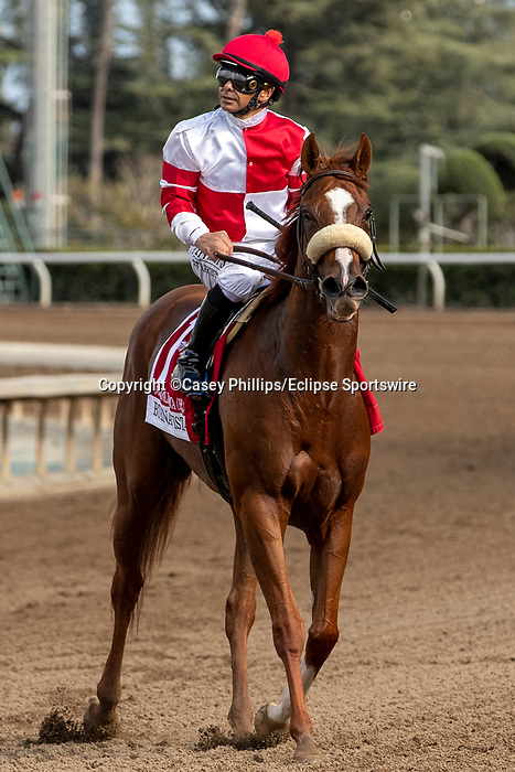 ARCADIA, CA  FEBRUARY 22: #1 Jolie Olimpica, ridden by Mike Smith, returns to the connections after getting up for the place in the Buena Vista Stakes (Grade ll) on February 22, 2020 at Santa Anita Park in Arcadia, CA.  (Photo by Casey Phillips/Eclipse Sportswire/CSM)