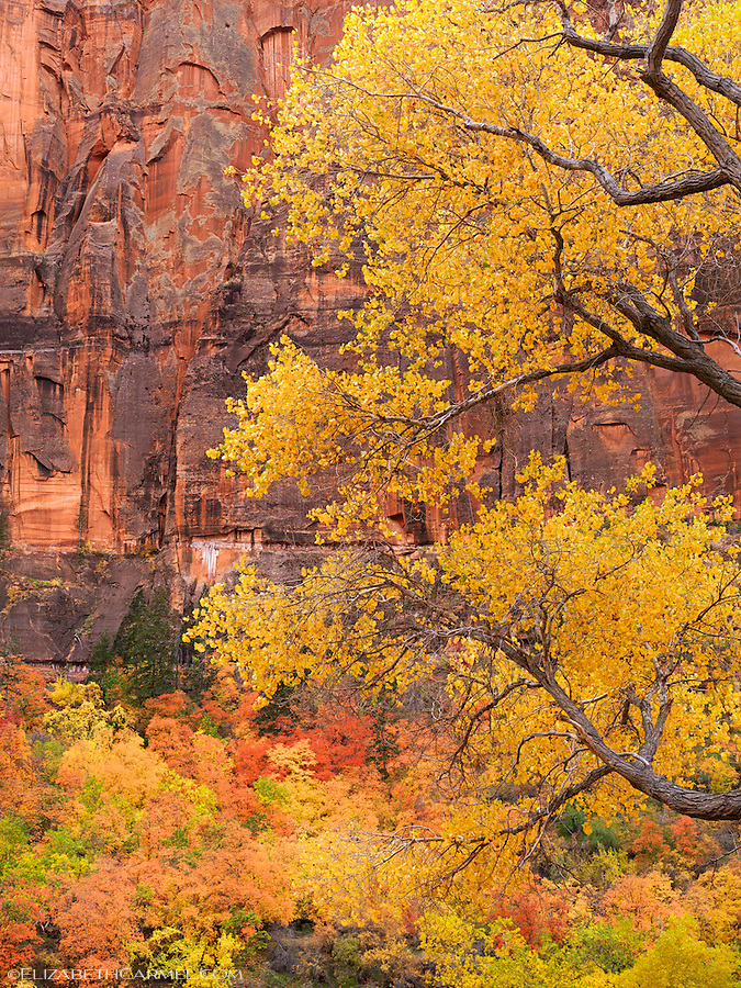 Canyon Autumn