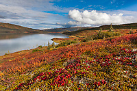 Rich autumn colors in the tundra, Wonder Lake, Denali National Park, Interior, Alaska.