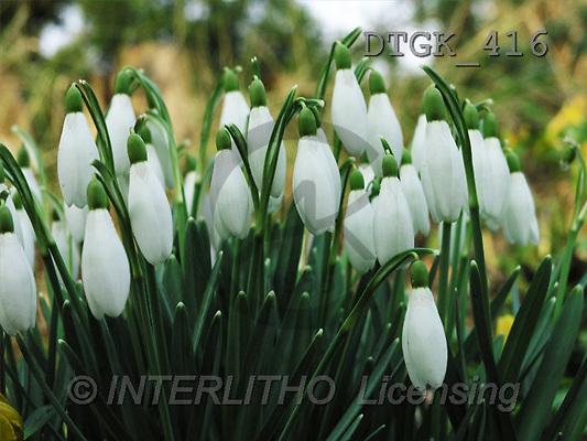 Gisela, FLOWERS, photos(DTGK416,#F#) Blumen, flores, retrato