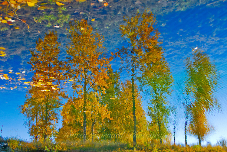 """AUTUMN LEAVES""<br />