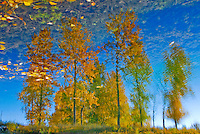 &quot;AUTUMN LEAVES&quot;<br />