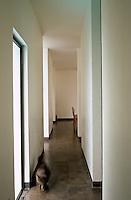 A cat walks down this stark slate-floored corridor