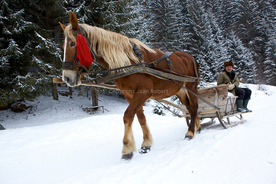 Le traineau tracté par des chevaux es utilisé pour le transport et le débardage