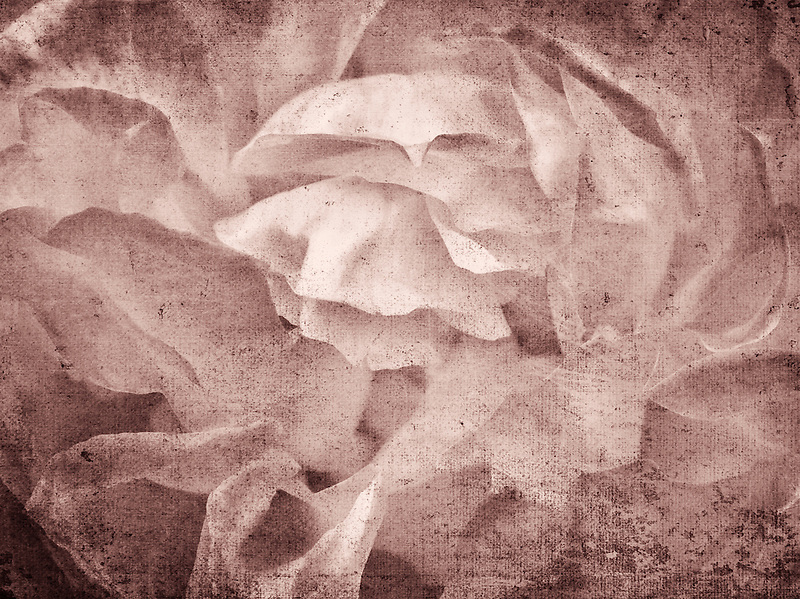 Well-Being rose. Oregon