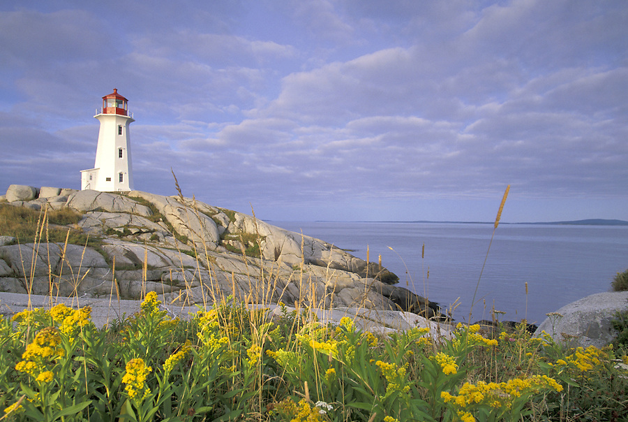 Peggy's Cove Lighthouse and goldenrod, Peggy's Cove, Nova Scotia, Canada