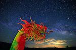 Ricardo Breceda's Serpent, Borrego Springs, CA