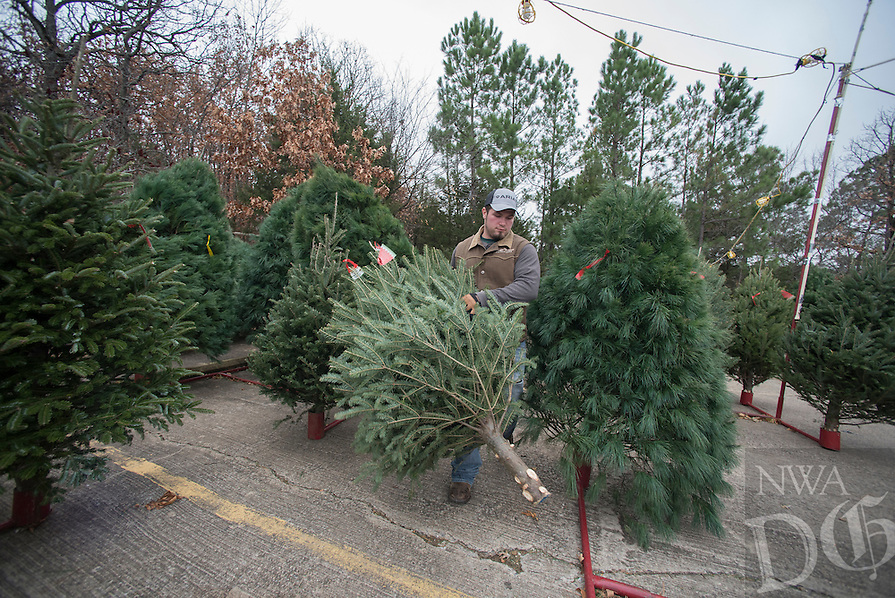 NWA Democrat-Gazette/J.T. WAMPLER Cody Washington of Summers arranges Christmas trees for display Sunday Dec. 11, 2016 while working at Wisconsin Tree Farms on College Ave. in Fayetteville. The tree lot has been a fixture in Fayetteville for over 30 years. There are fir, pine and spruce trees for sale until they run out which is usually around Dec. 20.