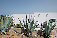 Spiky aloe vera plants punctuate the garden of this contemporary villa