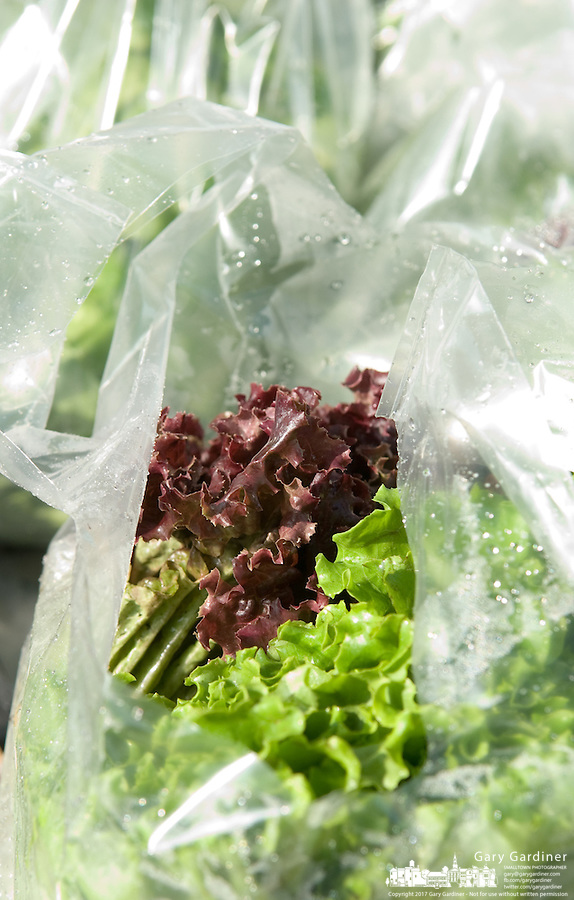 Lettuce in plastic bags at farmer's market