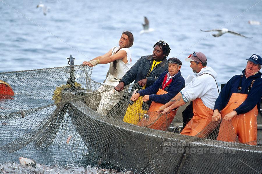 Fishermen haul a trap fishing net alexander nesbitt for Cod fishing ri