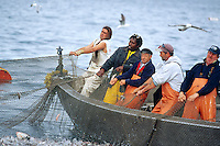USA, Newport, RI - Fishmen fromthe Aquidneck lobster company hauling a trap fishing net from the nozzel boat.