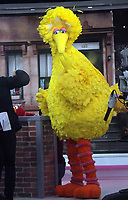 NEW YORK, NY - November 08 2018  Big Bird at Today Show to talk about new season of Sesame Street in New York November 08, 2018 Credit:RW/MediaPunch