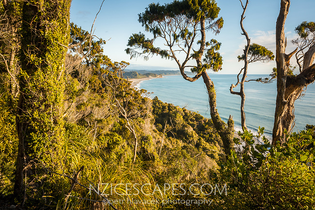Coastal views from track and through native forest near Okarito, Westland Tai Poutini National Park, West Coast, UNESCO World Heritage Area, South Westland, New Zealand, NZ