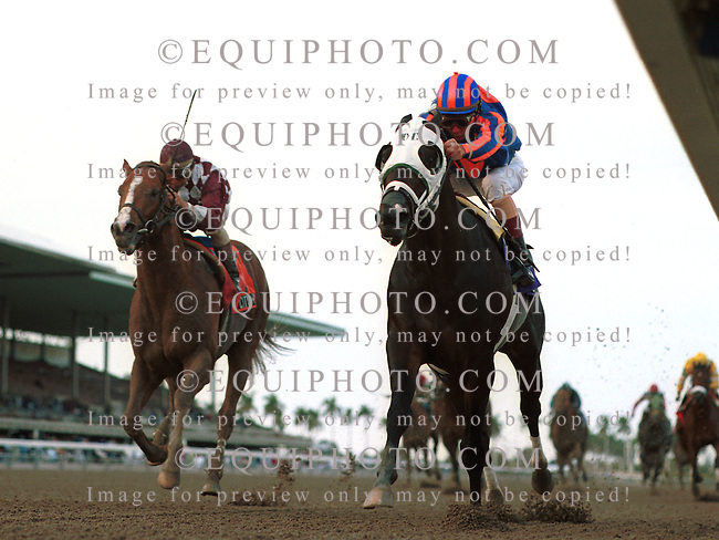 Yonaguska #10 (right) with Jerry Bailey riding won the $150,000  Hutcheson Stakes at Gulfstream Park over the late charging City Zip #7 and Jose Santos.
