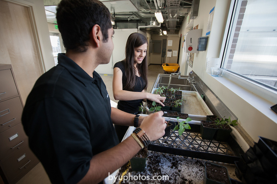 1201-14 061.CR2<br /> <br /> 1201-14 BYU Life Science Greenhouse<br /> <br /> Ivan Arrono Rodriguez and Karen Kohl work in the new Life Science Greenhouse. Friends, Working, Plants, Planting.<br /> <br /> January 11, 2012<br /> <br /> Photo by Jaren Wilkey/BYU<br /> <br /> &copy; BYU PHOTO 2011<br /> All Rights Reserved<br /> photo@byu.edu  (801)422-7322