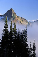 Pinnacle Peak above trees silhouetted against fog, Paradise, Mount Rainier National Park, Cascade Mountains, Washington