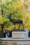 Elk statue in Park Blocks of downtown Portland, Oregon.Ginkgo trees in fall color.  Statue honors David Thompson an early Portland resident.