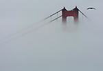 Fog creeps up the south tower of the Golden Gate Bridge in San Francisco, California.