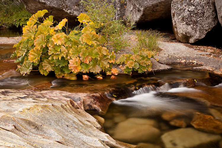 Willow Creek cascades down canyon into Bass Lake in the central California Sierra Nevada.