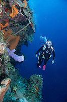 Diver on vertical wall, Exumas, Bahama Islands