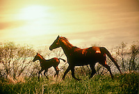 Mare and foal running through grass
