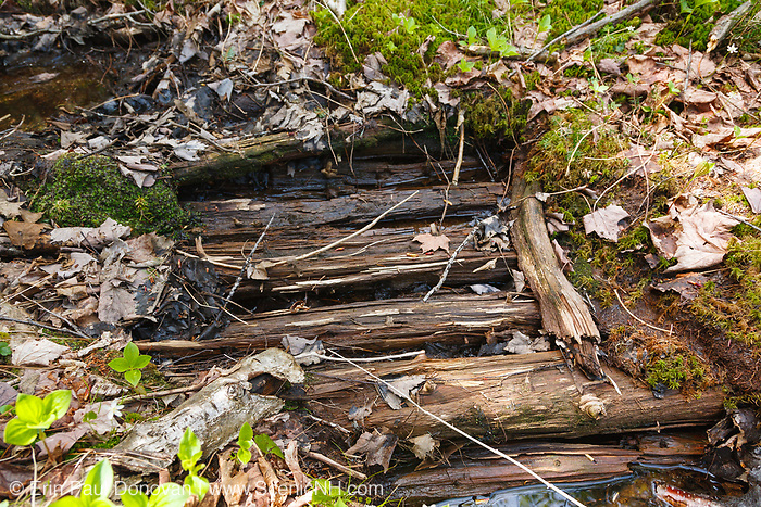 Remnants of an old sled road, near Camp 24B, of the East Branch & Lincoln Railroad in the Cedar Brook drainage of the Pemigewasset Wilderness in Lincoln, New Hampshire USA. The East Branch & Lincoln Railroad was a logging railroad that operated from 1893-1948. Wetland areas along sled roads were corduroyed with small trees laid crossway