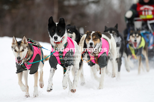 TOFTE, MN - JANUARY 31:  The sled dog team of Neil Rasmussen nears the finish of the mid distance race during the John Beargrease sled dog marathon January 31, 2011 in Tofte, Minnesota.  (Photograph by Jonathan P. Larsen)