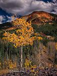 Aspen and Red Mountain, Colorado