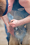 Male farrier hot shoes during the World Championship Blacksmith's Competition during the Calgary Stampede, Calgary, Alberta, Canada