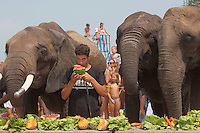 Rene Caselly Jr. trainer from Germany and the circus elephants of the Caselly Family eat watermelon together on a beach of lake Balaton in promotion of the Circus Night event at Balatonlelle (about 140 km South-West of capital city Budapest), Hungary on July 18, 2015. ATTILA VOLGYI