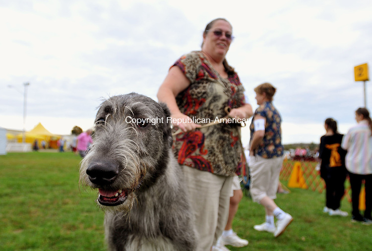 GOSHEN, CT, 25 SEPTEMBER 2011-092511JS05-Christine O'Grady of Middletown, holds her 10-month old Irish Wolfhound, Rooney, during the Northwestern CT Dog Club's 69th annual All Breed Dog Show Sunday at the Goshen Fairgrounds. More than 150 AKC recognized breeds competed for championship points, as well as obedience and rally titles. Proceeds from the event go to educational scholarships to local students pursuing academic careers involved in the care of dogs. <br />  Jim Shannon Republican-American