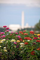 Washington DC Skyline National Mall Lincoln Memorial Washington Monument US Capitol