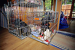 Labrador Puppies In Cage