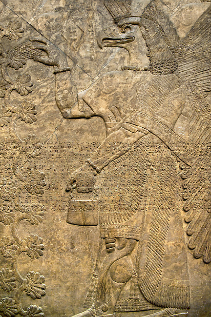 Assyrian relief sculpture panel of an eagle headed  protective spirit holding a symbolic cone and a bucket of holy water.  From Nimrud, Iraq,  865-860 B.C North West Palace, room F, panel 8.  British Museum Assyrian  Archaeological exhibit no WA 118804.