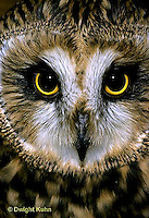 OW05-091c   Short-eared Owl - close-up of face -  Asio flammeus.