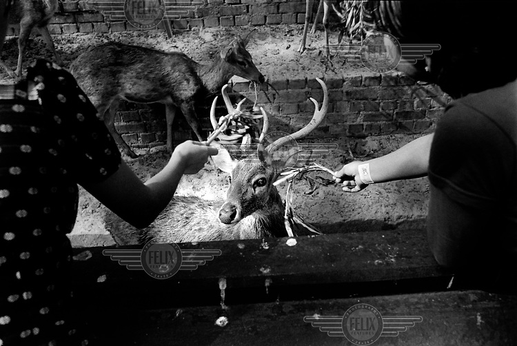 Visitors feed a barking deer (also known as a Muntjac) at the zoo in Rangoon. ..
