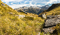 Fields of alpine vegetation near Harris Saddle on Routeburn Track.  Darran Mountains behind, Fiordland National Park, UNESCO World Heritage Area, Southland, South Island, New Zealand, NZ