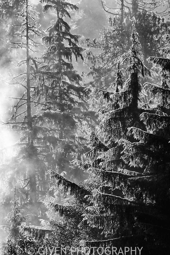 Forest, Mount Rainier National Park, Washington