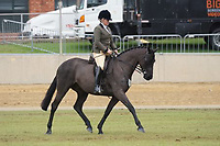 Hunter over 15 NE 15.2hh