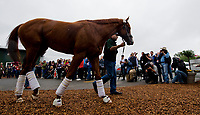 BALTIMORE, MD - MAY 16: Kentucky Derby winner, Justify, arrives for Preakness preparations after a flight from Louisville, at Pimlico Race Course on May 15, 2018 in Baltimore, Maryland (Photo by Sydney Serio/Eclipse Sportswire/Getty Images)