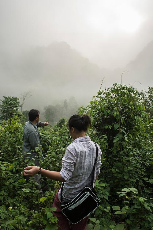 The limestone rainforest restoration site, a BGCI sponsored restoration site in the Xishuangbanna Tropical Botanic Gardens
