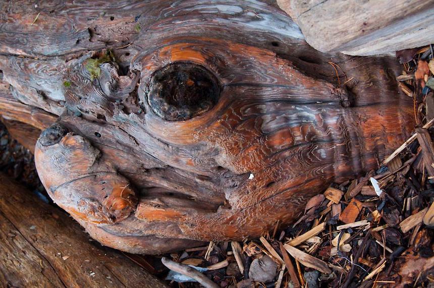 Tree Detail, Jones Island, San Juan Islands, Washington, US