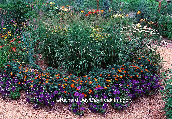 63821-037.14 Red Switchgrass (Panicum virgatum), Hero Red Marigolds & Blue Frost Petunias   IL