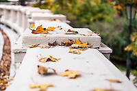 Autumn leaves lying on a concrete bannister. Photographed up close.