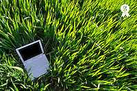 Laptop in green wheat field at early spring (Licence this image exclusively with Getty: http://www.gettyimages.com/detail/81867351 )