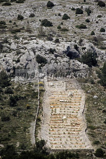 Croatie/Dalmatie/Primosten: Le vignoble - parcelle de vigne à flanc de montagne