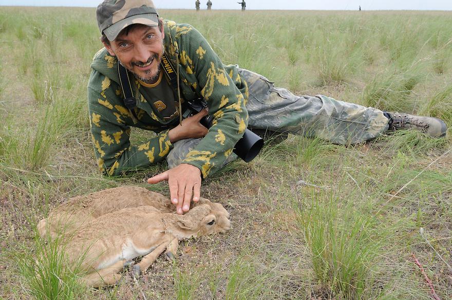 Mission: Saiga.Igor Shpilenok with saiga (Saiga tatarica) newborn calves in the steppe grasses of Cherniye Zemly (Black Earth) Nature Reserve, Kalmykia, Russia, May 2009.Saiga tatarica