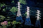 Rede elétrica na Floresta da Tijuca. Rio de Janeiro. 2003. Foto de Ricardo Azoury.