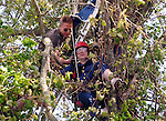 Don Branson Vice President of The Connecticut Parachutists Inc. in Ellington Connecticut, tries to untangle the leg of a 36 year old student jumper who get caught about 25 feet up in a tree while parachuting at Ellington Airport, Sunday, May, 16, 2010. The woman told rescuers she was trying to avoid power lines when a gust of wind blew her into clump of trees on the edge of a cornfield on Meadow Brook Road next to the airport landing zone. The woman was unharmed but it took the Ellington Fire Department about 1 hour to free her from the tree. The woman laughed off the incident than  hugged 2 unidentified people who watched the rescue unfold. (Jim Michaud/Journal Inquirer)